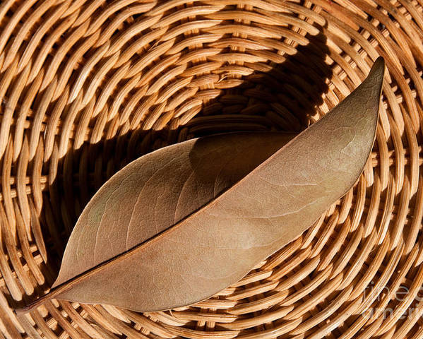 Brown Poster featuring the photograph Basket Of Brown by Dan Holm