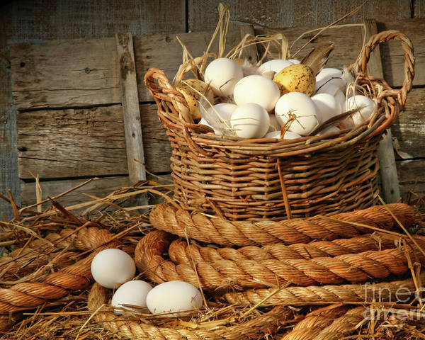 Agriculture Poster featuring the photograph Basket Of Eggs On Straw by Sandra Cunningham