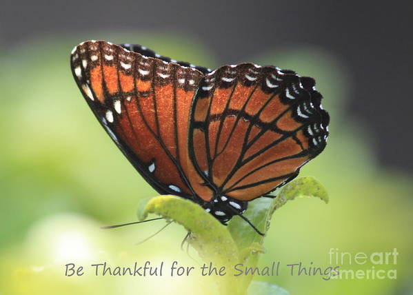 Butterfly Poster featuring the photograph Be Thankful by Carol Groenen