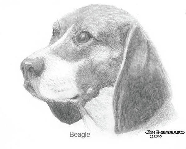 Dogs Poster featuring the drawing Beagle by Jim Hubbard