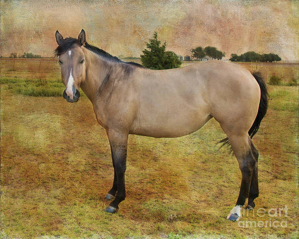 Horse Poster featuring the photograph Beautiful Buckskin by Betty LaRue