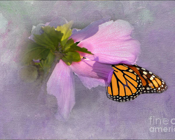 Monarch Butterfly Poster featuring the photograph Beautiful In Pink by Betty LaRue