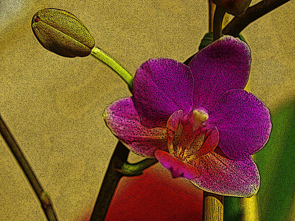 Orchid Poster featuring the digital art Beauty In Bloom by Teri Schuster