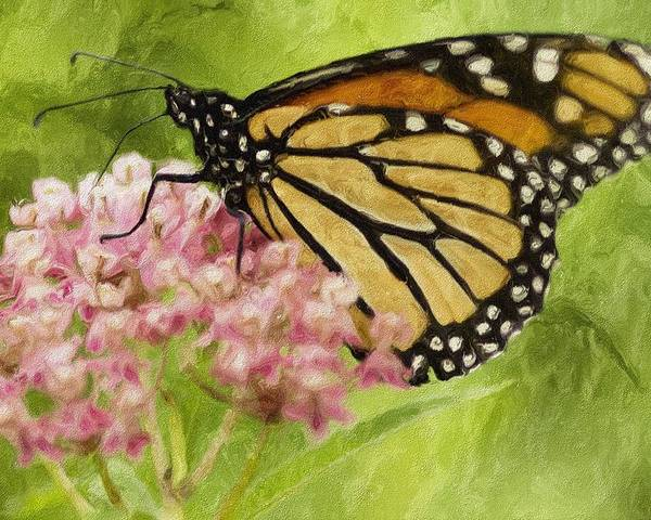 Butterfly Poster featuring the photograph Beauty Of Nature by Jack Zulli