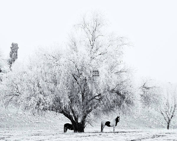 Horses Poster featuring the photograph Beneath A Frosty Canopy by Mike Dawson
