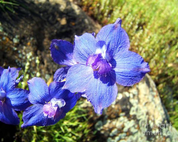 Artoffoxvox Poster featuring the photograph Blue Delphinium Flower Photograph by Kristen Fox