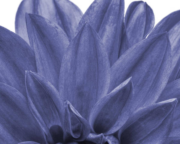 Annual Poster featuring the photograph Blue Petals by Al Hurley