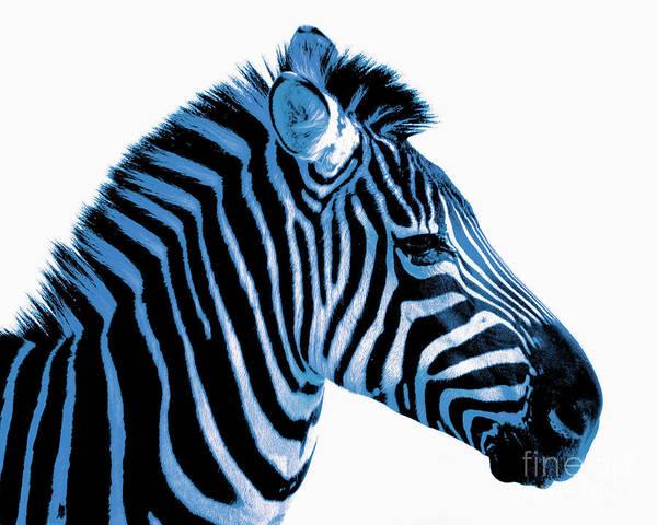 Blue Zebra Poster featuring the photograph Blue Zebra Art by Rebecca Margraf