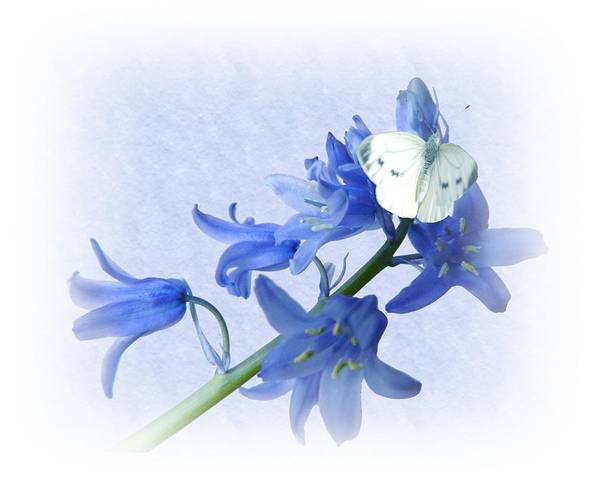 Bluebells Poster featuring the photograph Bluebells And Butterflies by Sharon Lisa Clarke