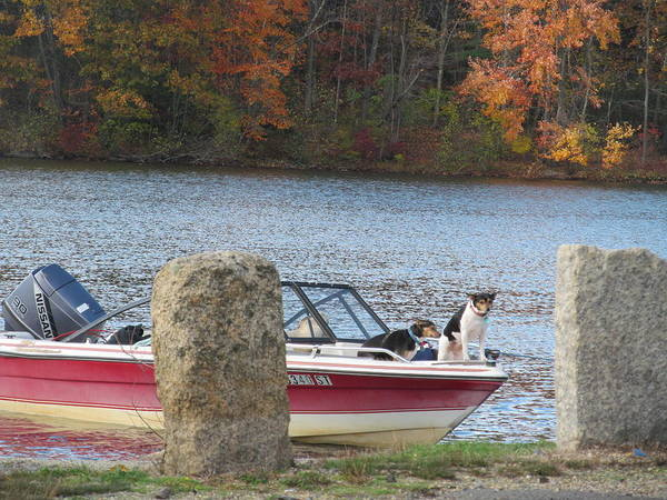 Nature Poster featuring the photograph Boating Pals by Loretta Pokorny