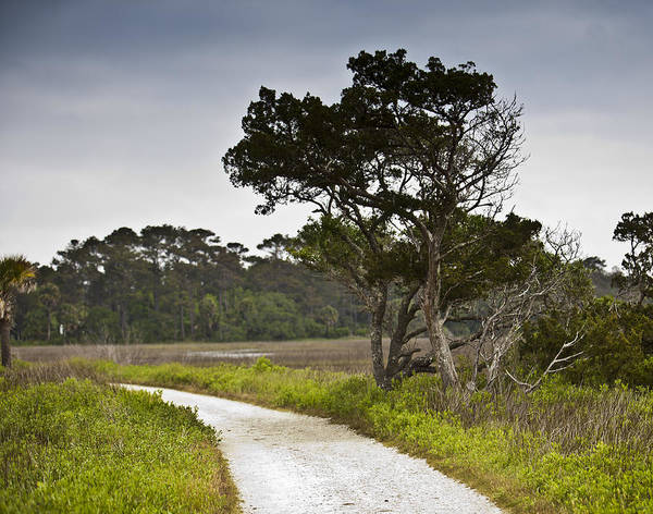 Charleston Poster featuring the photograph Botany Bay Pathway Tree by Donni Mac