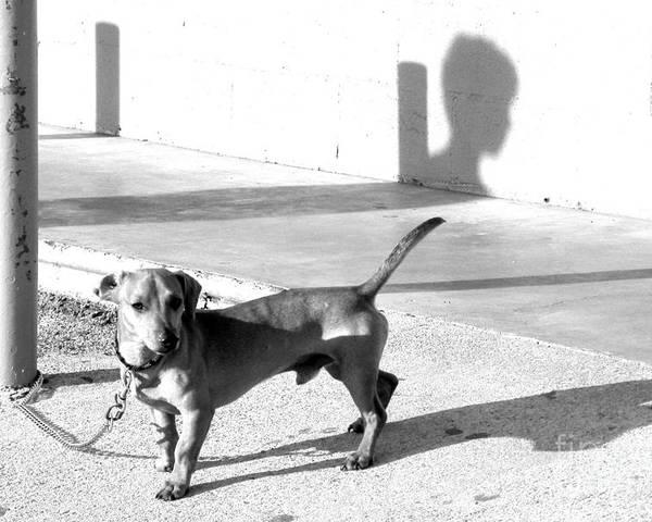 Dog Poster featuring the photograph Boy Meets Dog by Joe Jake Pratt