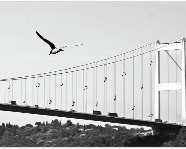 Horizontal Poster featuring the photograph Bridge And Seagull, Bosphorus, Istanbul, Turkey by Gulale