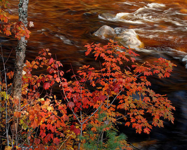 Fall Poster featuring the photograph Bright Leaves At Swift River by Nancy De Flon