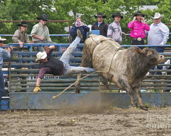 Photography Poster featuring the photograph Bull 1 - Rider 0 by Sean Griffin