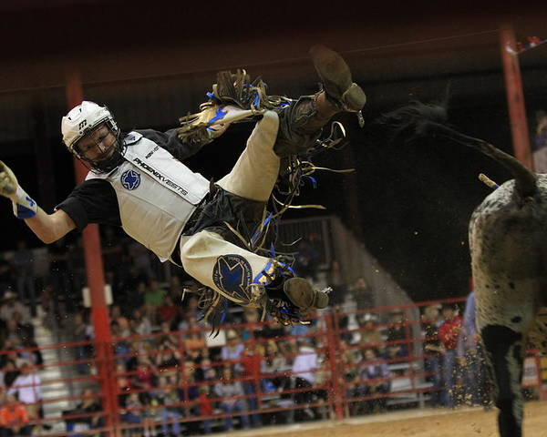 Rodeo Poster featuring the photograph Bull Riding by Ali Zaidi