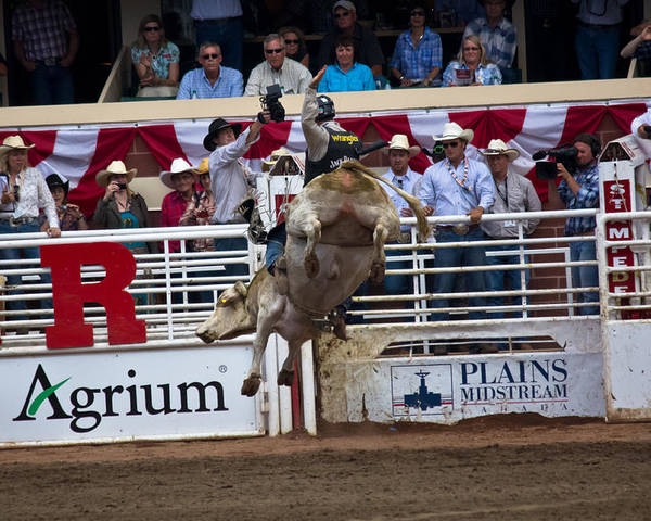 Cowboy Poster featuring the pyrography Bull With Some Big Air by Darren Langlois
