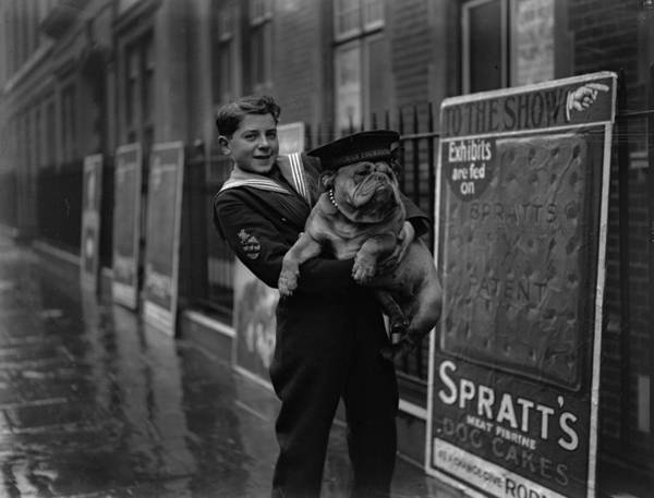 Child Poster featuring the photograph Bulldog Beauty by London Express