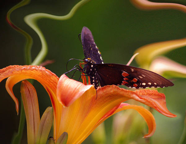 Nspirational Poster featuring the photograph Butterflies Are Free... by Arthur Miller