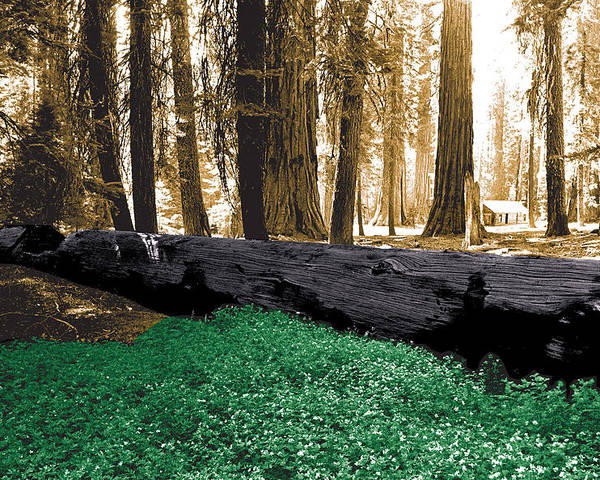 Yosemite Poster featuring the photograph Cabin In The Woods by Mike Flynn
