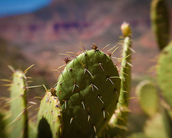 Canon D7 Poster featuring the photograph Cactus With A View by Paul Roach