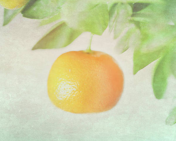Horizontal Poster featuring the photograph Calamondin Miniature Orange by Peter Chadwick LRPS