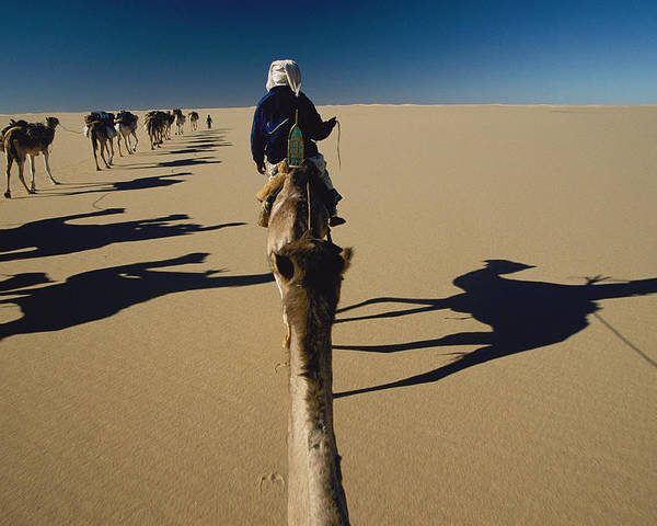 Color Image Poster featuring the photograph Camel Caravan And Their Shadows by Carsten Peter