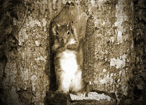 Squirrel Poster featuring the photograph Can You See Me Now by Marjorie Smith