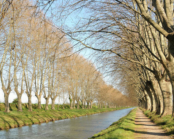 Horizontal Poster featuring the photograph Canal With Tree by Teocaramel