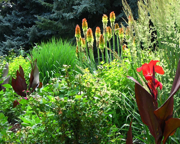 Canna Lily Poster featuring the photograph Canna Lily Garden by Gretchen Wrede