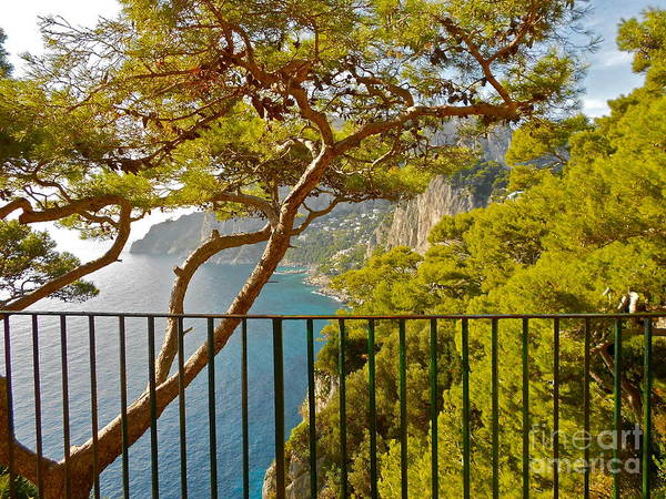 Angelica Dichiara Poster featuring the photograph Capri Panorama With Tree by Italian Art