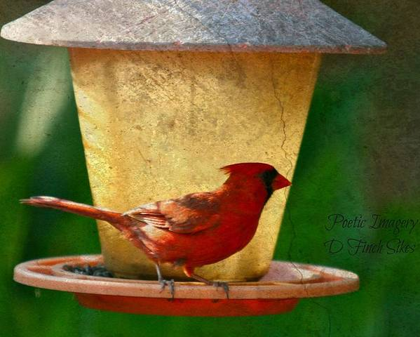 Bird Poster featuring the photograph Cardinal by Debbie Sikes