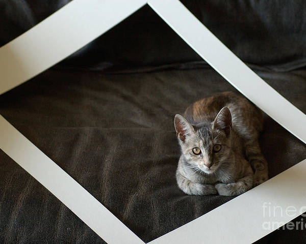 Cat Poster featuring the photograph Cat In A Frame by Micah May