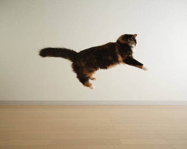 Horizontal Poster featuring the photograph Cat Jumping In Air by Junku
