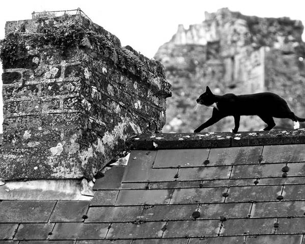 Ireland Poster featuring the photograph Cat On Slate Roof by Leslie Lovell