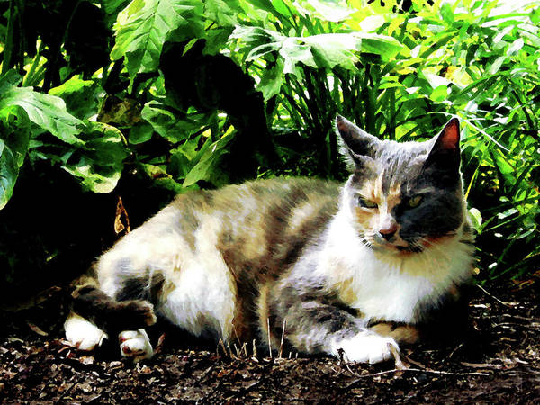 Cat Poster featuring the photograph Cat Relaxing In Garden by Susan Savad