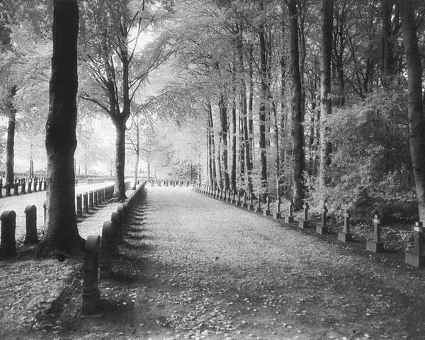 World War I; One; Wwi; Ww1; 1st; First; Great; 1; Wooded; Woods; Wood; Rows; Tombstones; Gravestones; War Tomb Poster featuring the photograph Cemetery At Ypres by Simon Marsden