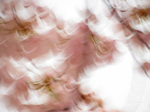Abstract Poster featuring the photograph Cherry abstract by Rrrose Pix