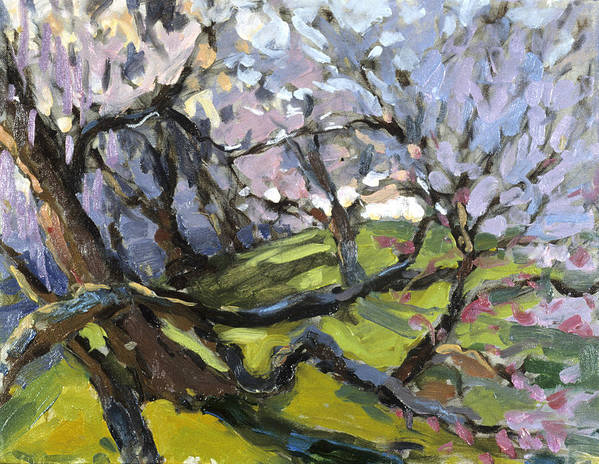Cherry Blossoms Poster featuring the painting Cherry Blossoms by Jane Oriel
