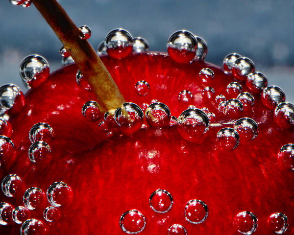 Cherry Cherries Poster featuring the photograph Cherry Bubbles Under Water by Tracie Kaska