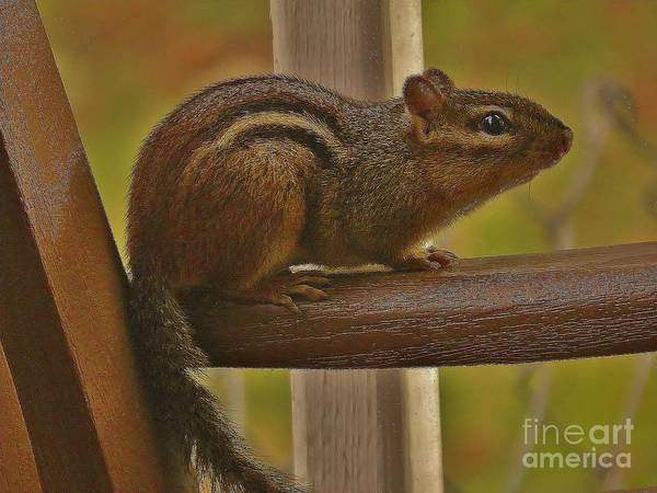 Chipmunk Poster featuring the photograph Chipmunk Chair by Earl Williams Jr