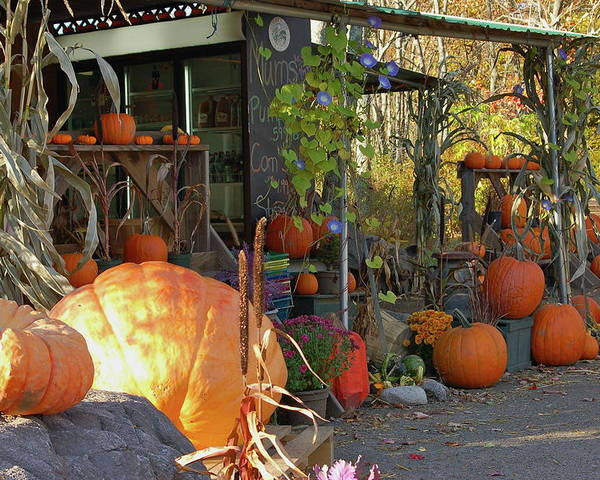 Pumpkins Poster featuring the photograph Colby Farm Stand by Kristine Patti