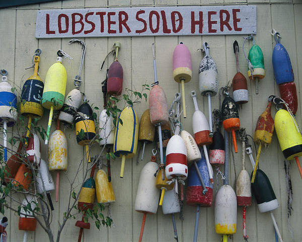 North America Poster featuring the photograph Colorful Lobster Buoys Hang On A New by Stephen St. John