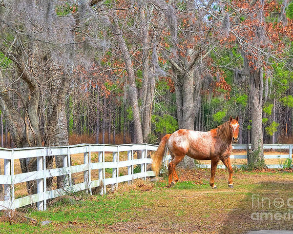 Equestrian Poster featuring the photograph Coosaw - Outside The Fence by Scott Hansen