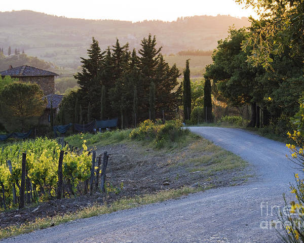 Agriculture Poster featuring the photograph Country Road At Sunset by Jeremy Woodhouse