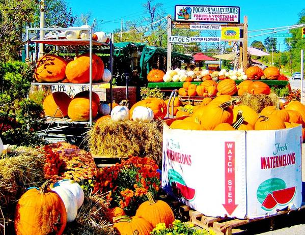 Pumpkin Poster featuring the photograph Country Road Farm Stand by Susan Carella