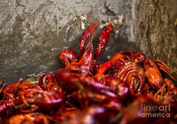 New Orleans Poster featuring the photograph Crawdaddy by Leslie Leda