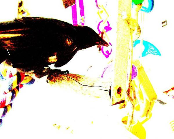 Crow Poster featuring the mixed media Curious Crow by YoMamaBird Rhonda