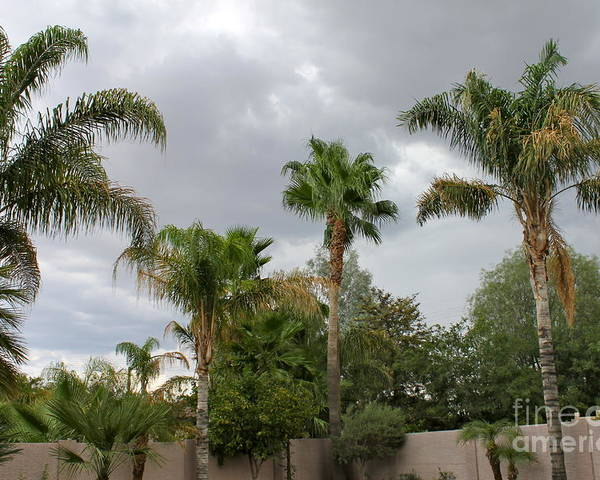 Rain Poster featuring the photograph Desert Storm by Pamela Walrath