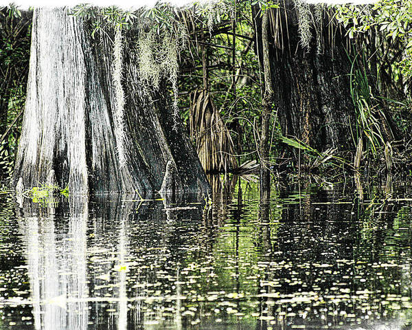 River Poster featuring the photograph Details Of A Florida River by Janie Johnson